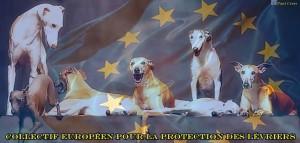Galgos éthique europe et lettre ouverte aux députés européens dans animaux aaaaaaaaaagalgo-300x143