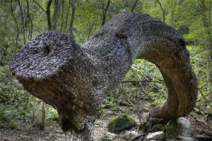 L'arbre aux souhaits dans insolite 00000000000000000000000000000000000000000000000000000000000000003d3fe2ff35fd2a75e238cf1218704027_tree1-300x199