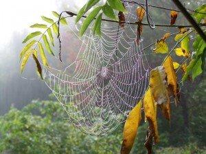 toile-araignee