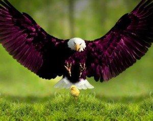 oiseaux1380289_10153345072735118_34656519_n